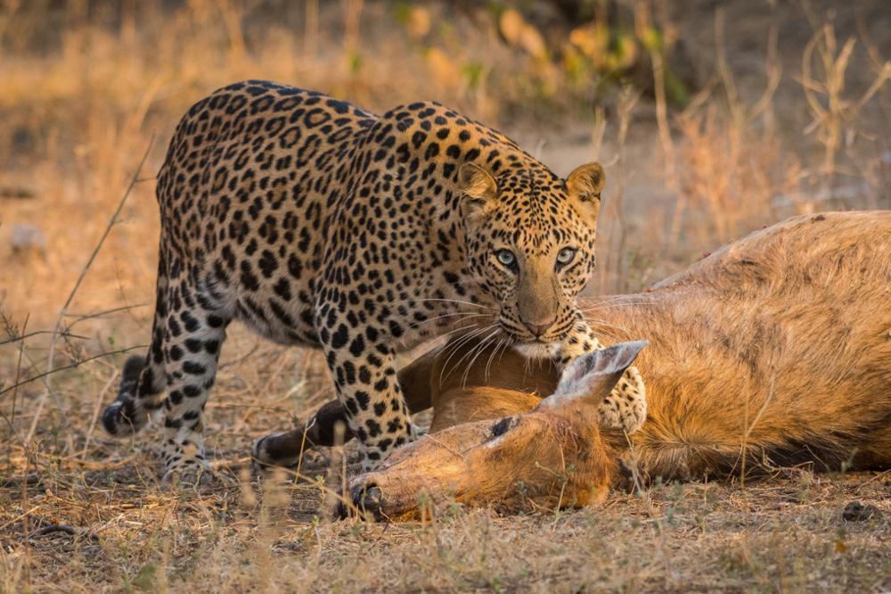 Les animaux à voir lors d'un voyage en Inde