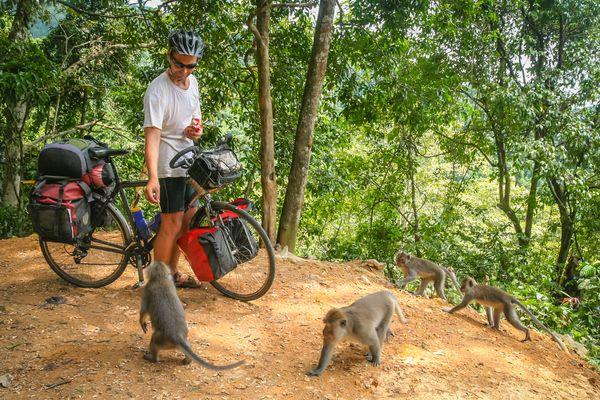Cycliste qui nourrit des singes en Asie